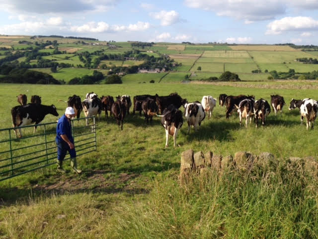 Our Cow Molly BBC Food and Farming awards